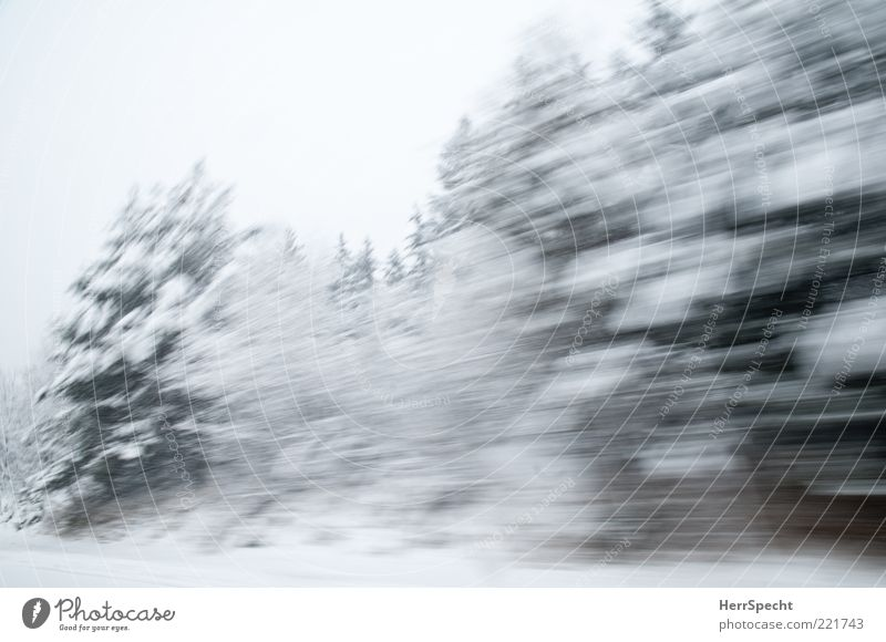Nature Green White Tree Winter Forest Snow Landscape Ice Speed Frost Fir tree Motoring Snowscape Copy Space Bad weather