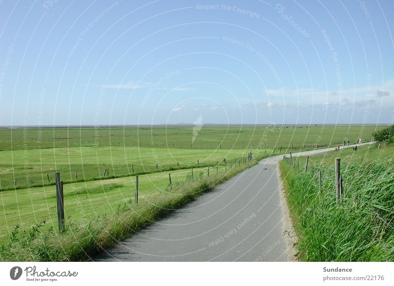 Sky Summer Calm Meadow Horizon Europe Cow Fence North Sea Neuwerk