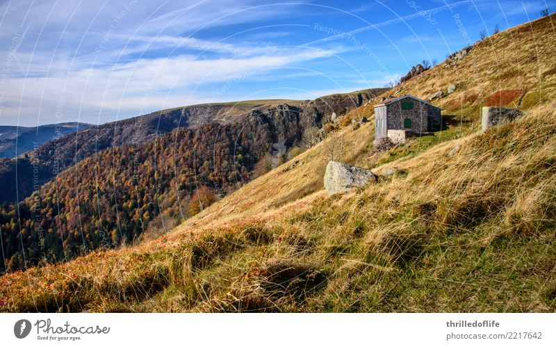 Autumn colours in French Vacation & Travel Mountain Hiking Climbing Mountaineering Cycling Nature Landscape Sky Clouds Beautiful weather Grass Bushes Meadow