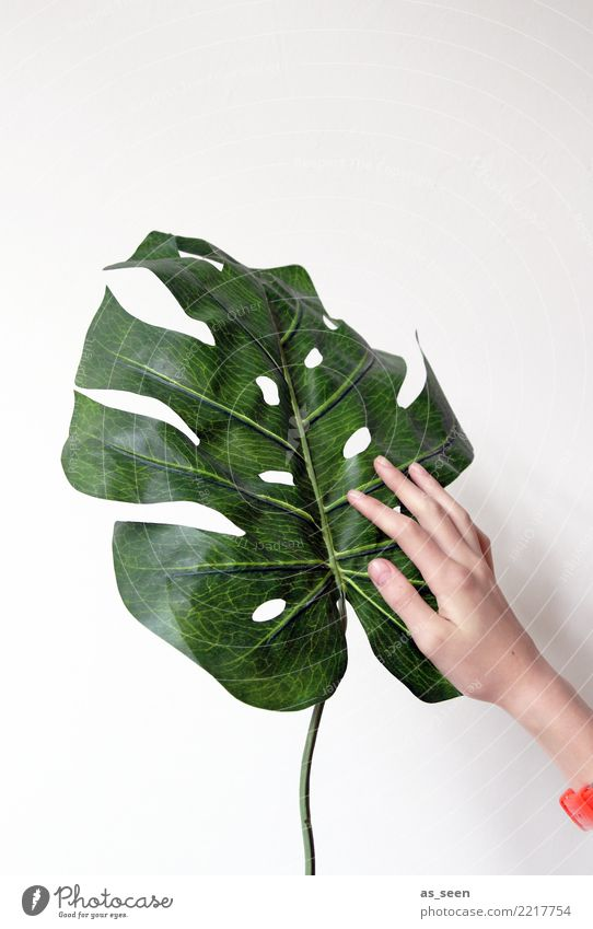 plant lovers Decoration Living room Hand Plant Leaf Foliage plant Pot plant Philodendron Monstera Touch Authentic Friendliness Natural Positive Green Orange