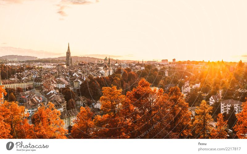 Plant Town Tree Red Leaf Architecture Yellow Autumn Building Brown Bridge Capital city Old town Downtown Twig Switzerland
