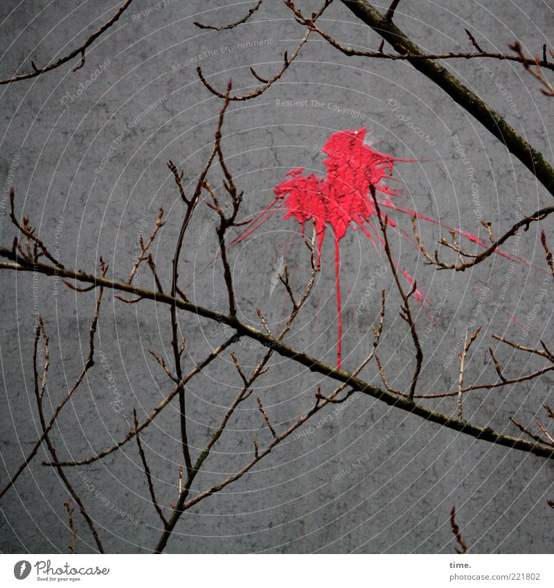 HH10.2 | Optical Opinion Plant Autumn Tree Concrete Throw Exceptional Gray Red Frustration Colour Bans Branch Wall (building) Concrete wall Dye Patch of colour