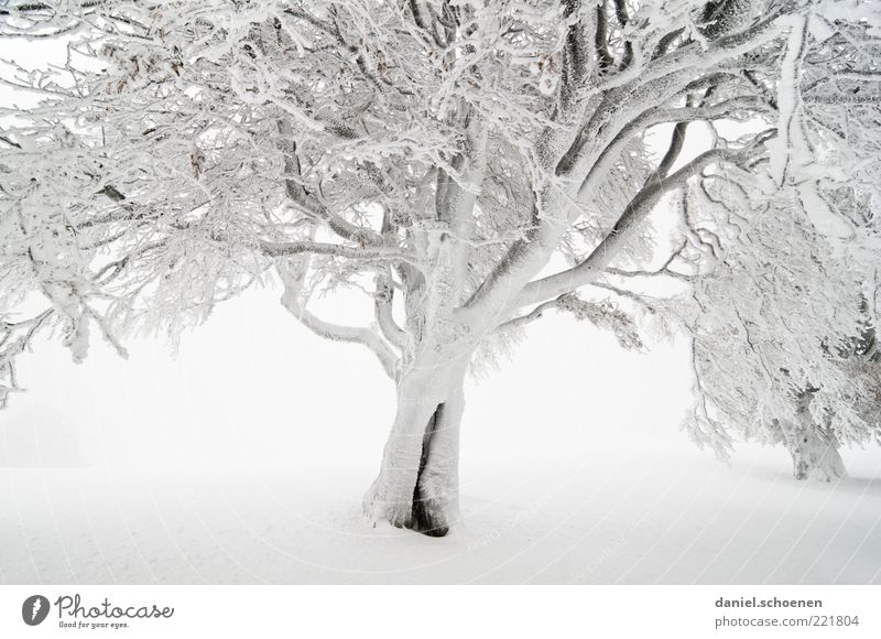 magic forest Winter Snow Environment Nature Climate Fog Ice Frost Tree Bright White Black Forest Beech tree Branch Subdued colour Deserted Winter mood