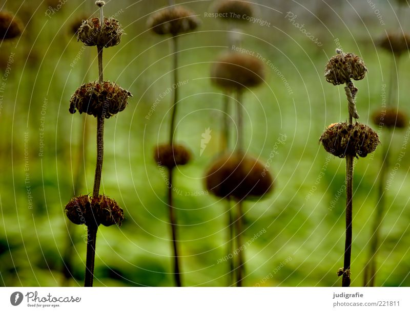 meadow Environment Nature Plant Grass Blossom Meadow To dry up Growth Dark Natural Dry Wild Green Moody Transience Colour photo Exterior shot Deserted Day Blur