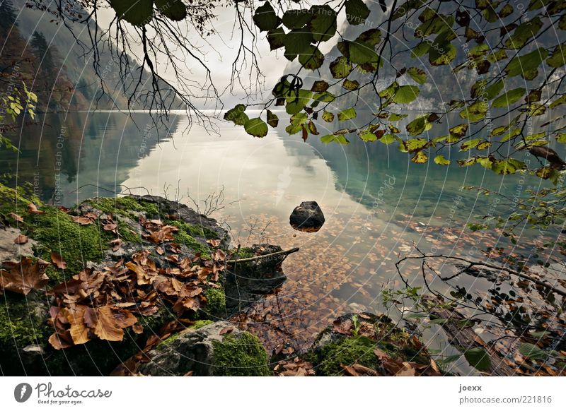 Still Water Nature Landscape Sky Clouds Autumn Tree Mountain Lakeside Brown Gray Green Lake Königssee Colour photo Subdued colour Multicoloured Exterior shot