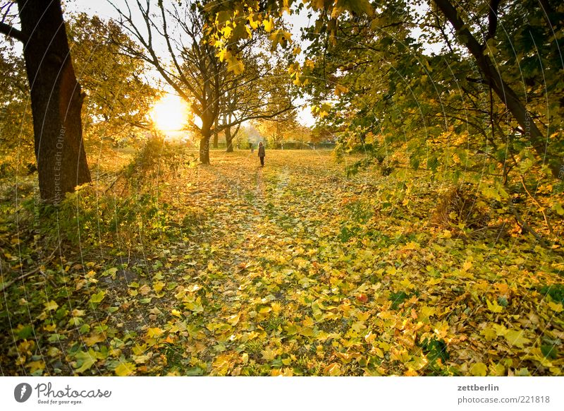 Human being Nature Tree Plant Sun Leaf Adults Environment Landscape Autumn Lanes & trails Park Earth Weather Hiking To go for a walk
