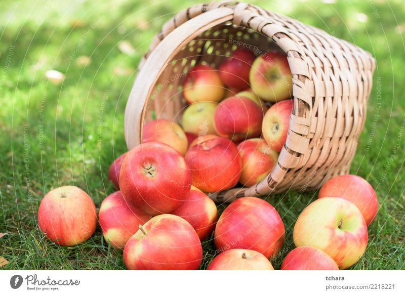 Ripe apples Fruit Apple Juice Summer Garden Nature Landscape Plant Autumn Tree Grass Leaf Container Growth Fresh Bright Delicious Natural Juicy Green Red White
