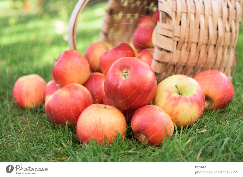 Red apples Fruit Apple Juice Summer Garden Nature Landscape Plant Autumn Tree Grass Leaf Container Growth Fresh Bright Delicious Natural Juicy Green White