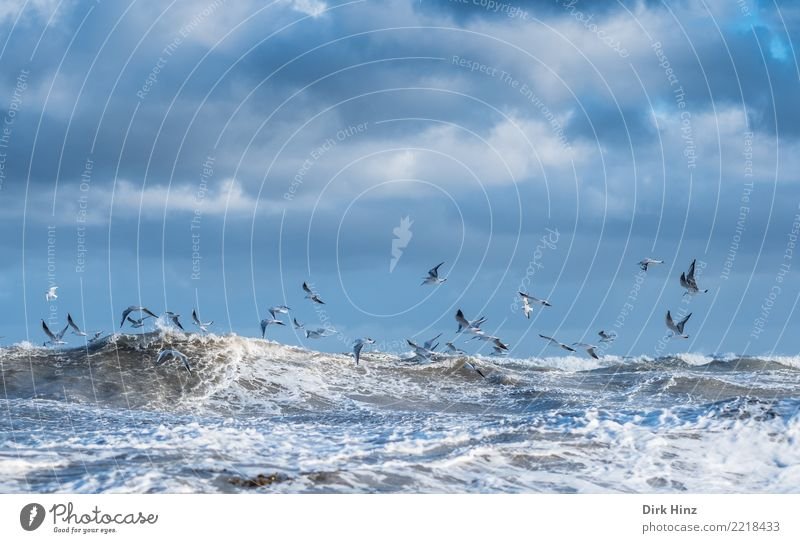 Seagulls in the Baltic storm Environment Nature Landscape Water Sky Clouds Storm clouds Horizon Autumn Climate change Gale Waves Coast Baltic Sea Ocean Flying