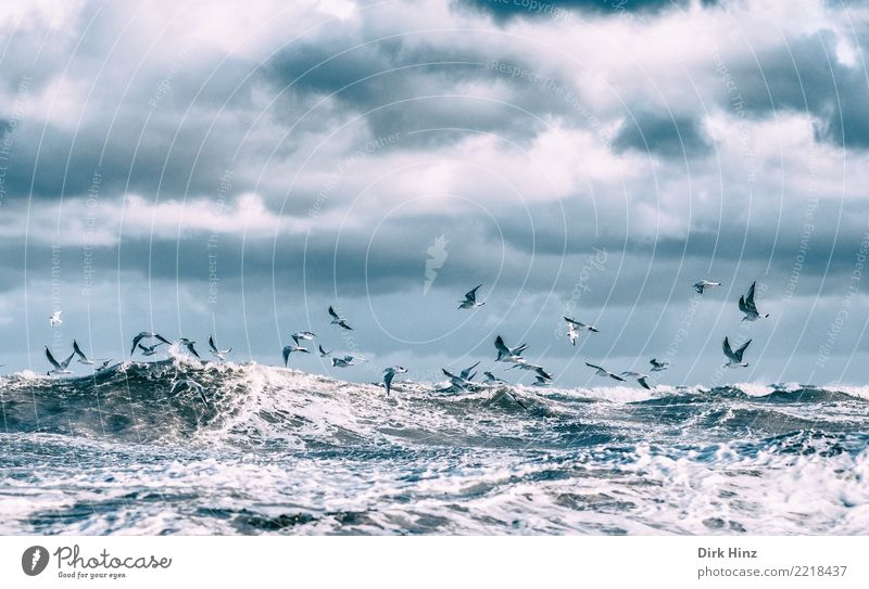 Sky Nature Ocean Animal Clouds Environment Autumn Coast Movement Bird Flying Waves Air Wild animal Group of animals Wing