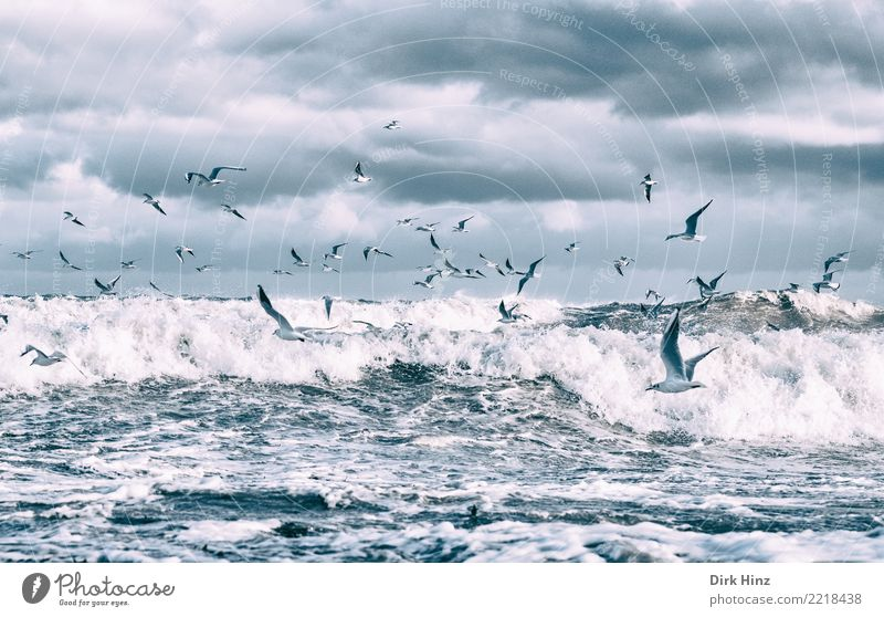 Seagulls over the Baltic Sea waves IV Environment Nature Landscape Elements Air Water Clouds Storm clouds Horizon Autumn Winter Bad weather Waves Coast Ocean