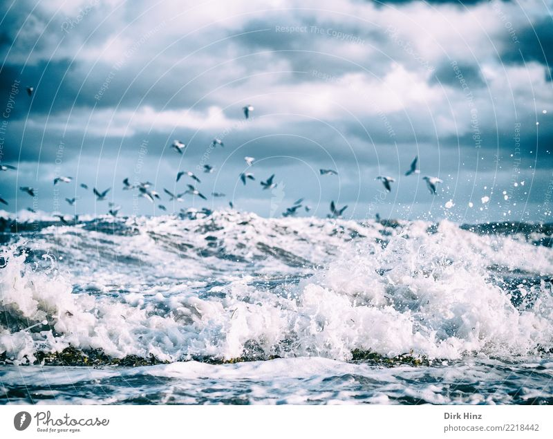 Seagulls over the Baltic Sea waves II Environment Nature Landscape Elements Air Water Sky Clouds Storm clouds Horizon Autumn Winter Bad weather Wind Gale Waves