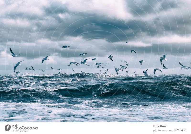Seagulls over the Baltic Sea waves III Environment Nature Landscape Air Water Sky Clouds Storm clouds Horizon Autumn Winter Climate change Weather Bad weather