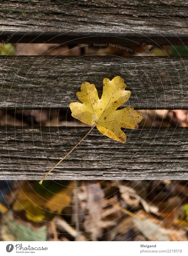Nature Old Plant Tree Leaf Calm Yellow Autumn Sadness Death Brown Contentment Park Grief Decline Fatigue