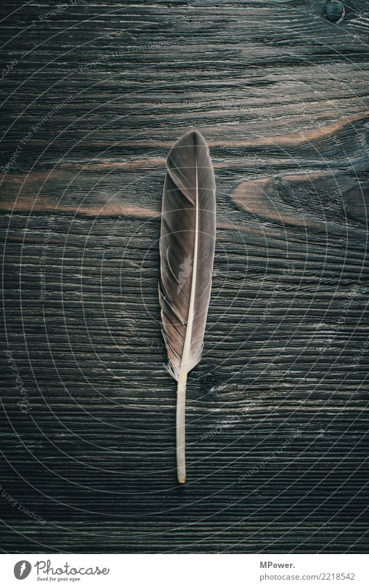 Old Wood Gray Feather Write Pen Quill Texture of wood