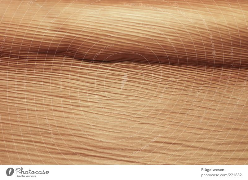 Nature Plant Wood Line Brown Background picture Design Environment Desert Wrinkles Palm tree Thread Limp Pattern Palm frond Cork
