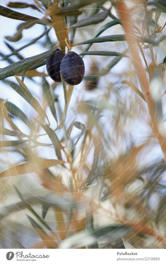 #A# Black olives Environment Nature Plant Esthetic Olive Olive tree Olive oil Olive leaf Olive harvest Mediterranean Spain Colour photo Subdued colour