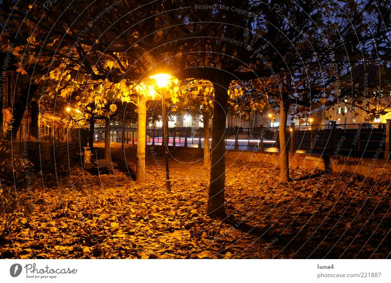 autumnal Nature Autumn Tree Leaf Park Capital city Lanes & trails Yellow Gold Romance Loneliness Idyll Seasons Colour photo Exterior shot Deserted Evening