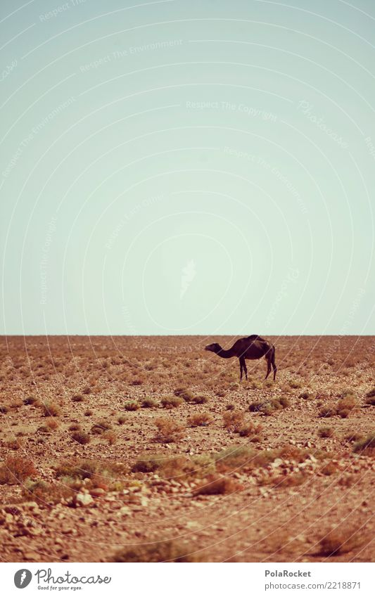 #A# Desert animal Landscape Esthetic Warmth Camel Dromedary Desert plant Climate change Animal Loneliness Morocco Colour photo Multicoloured Exterior shot