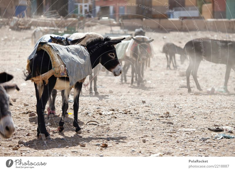#A# Donkey market Art Esthetic Dog-ear Donkey foal Markets Arabia Near and Middle East Morocco Marrakesh Colour photo Subdued colour Exterior shot Deserted