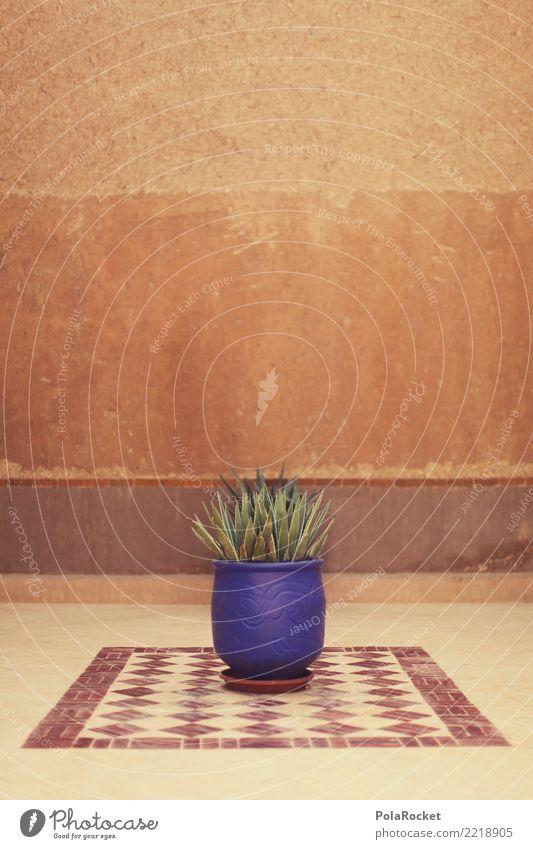 #A# Arabian pot plant Art Esthetic Pot plant Near and Middle East Morocco Marrakesh Blue Houseplant Colour photo Subdued colour Exterior shot Detail Deserted