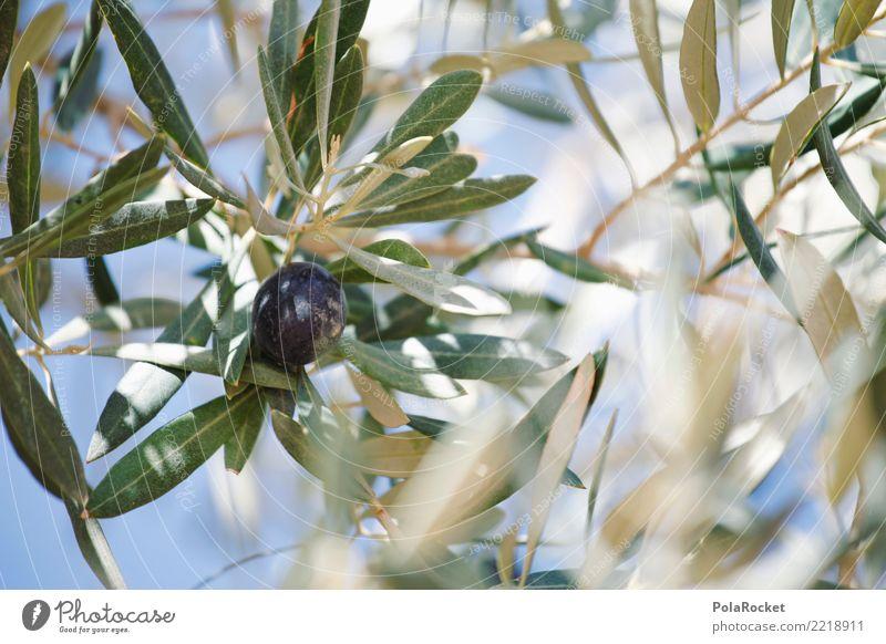#A# Olive Black Environment Nature Esthetic Climate Olive tree Olive oil Olive grove Olive leaf Olive harvest Ecological Organic produce Mediterranean