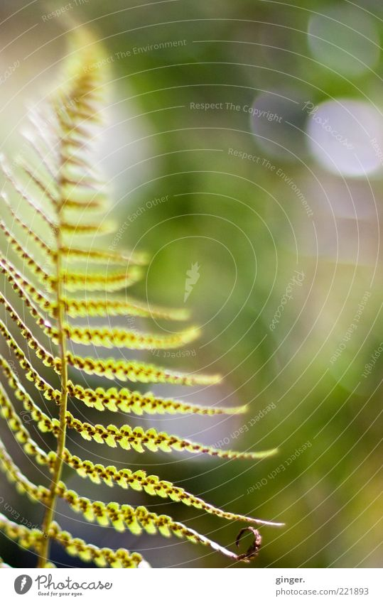 Late summer (memory) Environment Nature Plant Summer Weather Beautiful weather Fern Foliage plant Bright Green Easy Ease Point Blur Deserted Fern leaf