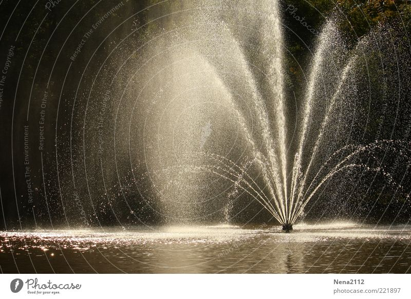 refreshment Water Drops of water Esthetic Cold Wet Beautiful Water fountain Pond Inject Refreshment Effervescent Colour photo Exterior shot Deserted