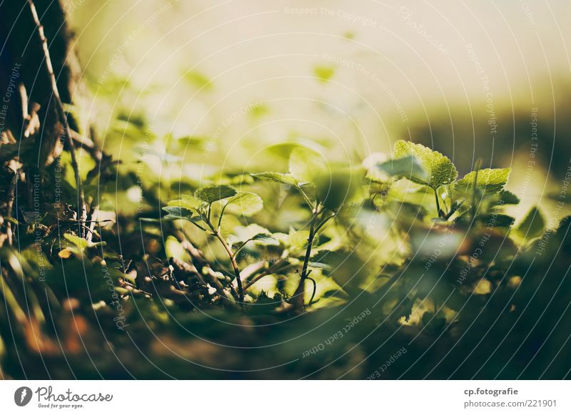 Nature Plant Summer Leaf Life Spring Contentment Beautiful weather Foliage plant Woodground Leaf green