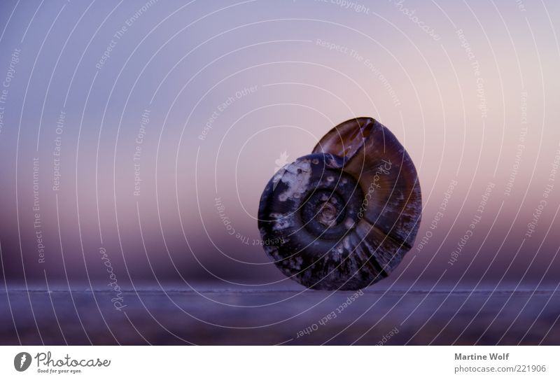 @ Nature Animal Snail Snail shell Living or residing Violet Protection Calm Safety retreat Balance Domicile Long shot Spiral Stand Colour photo Exterior shot