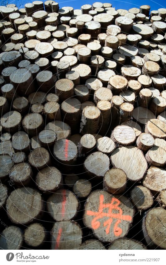 Wood in front of the hut Logistics Environment Tree End Life Planning Death Past Transience Value Tree trunk Stack Many Height Barrier Lumber industry