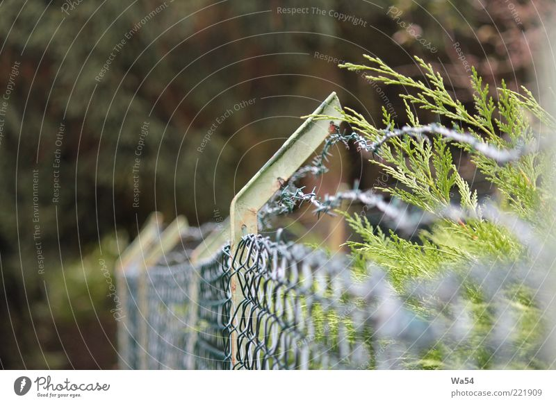 ostracized Nature Leaf Foliage plant Garden Metal Line Knot Threat Sharp-edged Hideous Thorny Brown Multicoloured Gray Green Silver Safety Protection Divide
