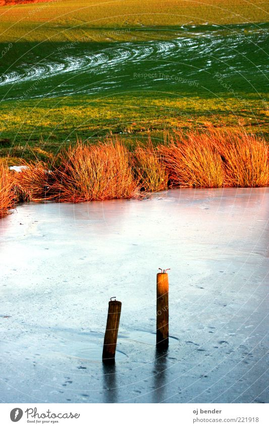 Water Beautiful Winter Cold Style Landscape Ice Frost Bushes Natural Frozen Lakeside Pond Wooden stake Frozen surface Winter mood