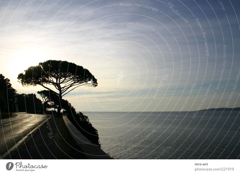 Beautiful Tree Ocean Far-off places Coast Horizon Curve Beautiful weather Cliff Mediterranean sea Country road Morning French Southern France Cote d'Azur