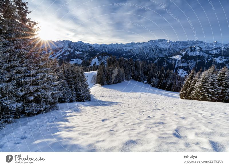 morning sunshine in snowy Alps Vacation & Travel Sun Winter Snow Mountain Nature Landscape Ice Frost Forest Hill White star Alpine peak Spruce coniferous