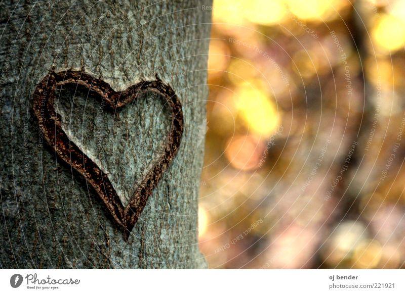 Heart in autumn Wood Emotions Happy Infatuation Romance Love Colour photo Exterior shot Deserted Evening Sunlight Blur Long shot Tree trunk Memory Heart-shaped