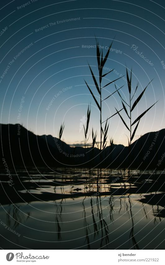 Blue Lake Nature Water Cloudless sky Summer Grass Foliage plant Alps Lake Achensee Calm Colour photo Exterior shot Deserted Twilight Silhouette Reflection