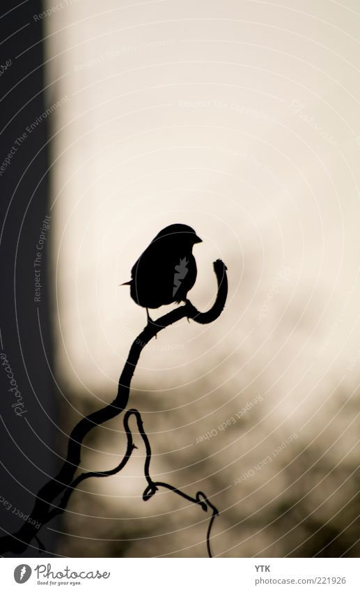 Nature Plant Black Loneliness Animal Dark Environment Moody Air Small Bird Wait Sit Wild animal To hold on Snapshot