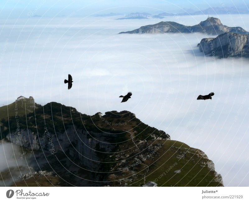 outlaw Nature Landscape Air Sky Clouds Horizon Autumn Weather Beautiful weather Fog Moss Alps Mountain Peak Animal Bird 3 Flock Pair of animals Moody Might Calm