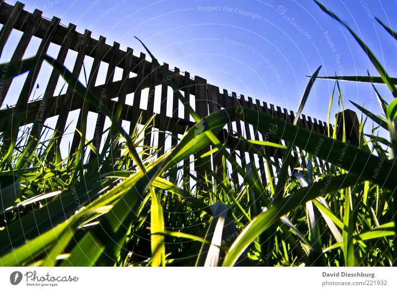 Closed Nature Plant Cloudless sky Summer Beautiful weather Grass Garden Meadow Blue Green Black Gate Fold Wooden fence Fence Ground Blade of grass Wooden board