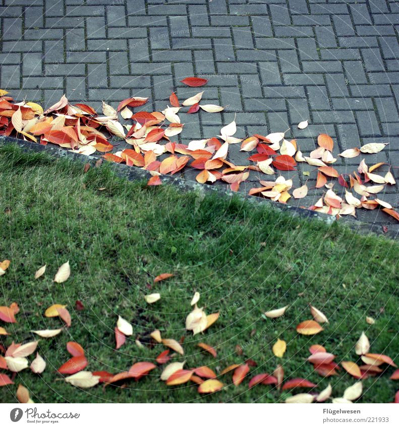 Nature Leaf Cold Meadow Autumn Wind Weather Environment Gale Paving stone Autumn leaves Knoll Bad weather Plant Autumnal Autumnal colours