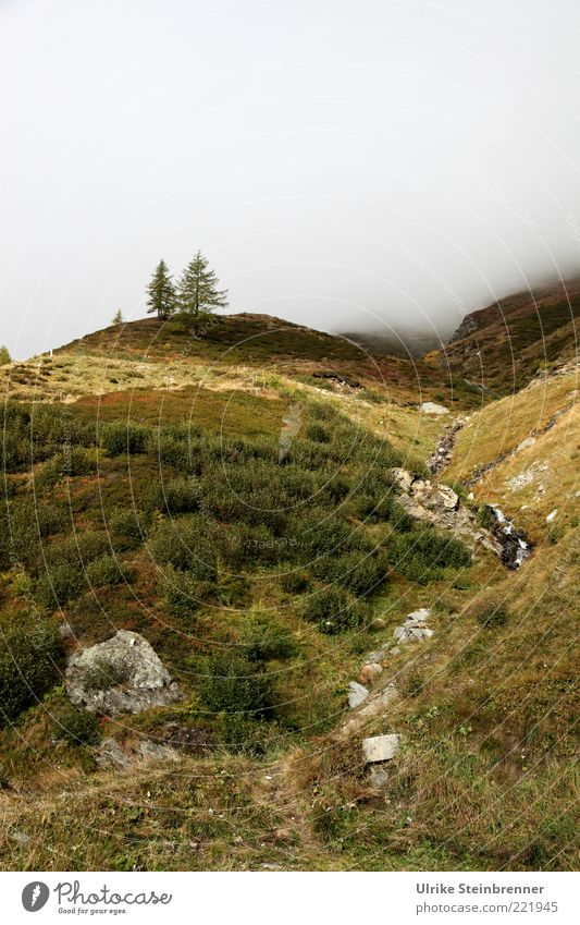 autumn mats Nature Landscape Plant Autumn Fog Tree Grass Bushes Rock Alps Mountain Val Passiria yoke of heaven Italy Natural Wild Green Environment Fir tree