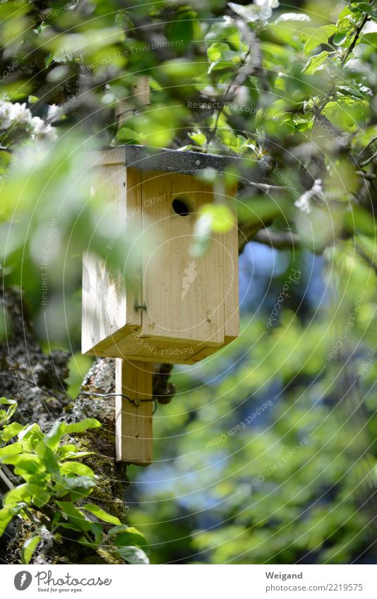 nesting box Living or residing Flat (apartment) Dream house Garden House building Bird Pair of animals Animal family Observe Simple Home country Nesting box