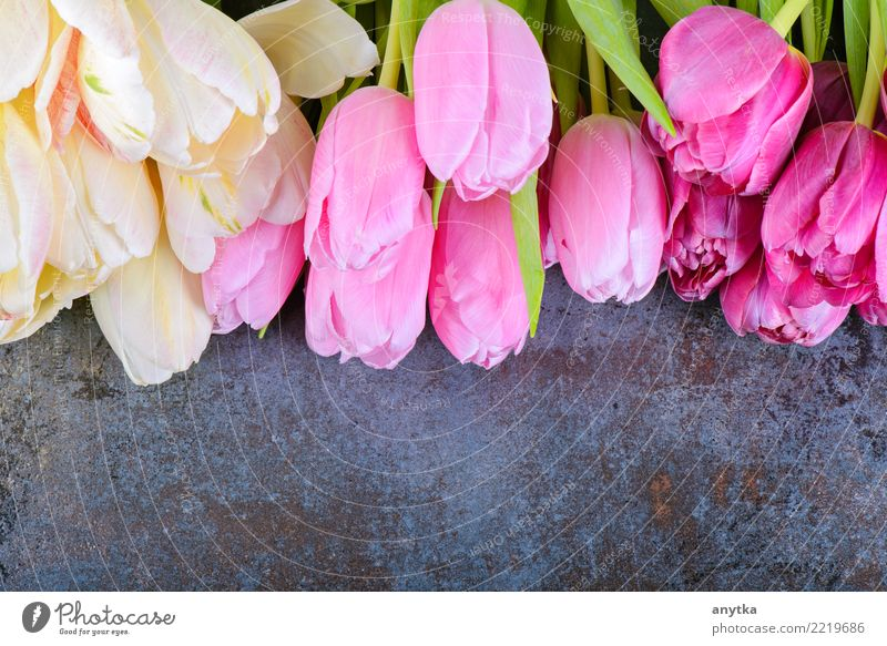 Fresh tulips on gray Nature Plant Summer Colour Beautiful Flower Blossom Spring Natural Pink Design Copy Space Multiple Seasons Bouquet