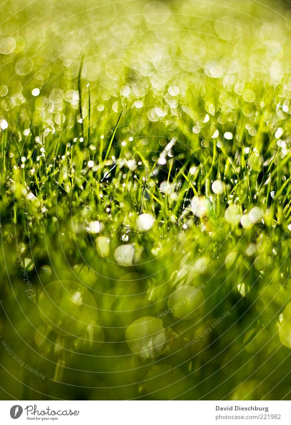 glitter party Nature Plant Water Drops of water Summer Rain Grass Meadow Green Glittering Circle Whispering grass Bright Dew Beautiful Colour photo