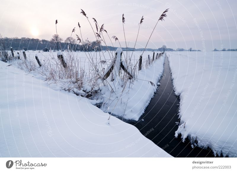 Cuddly Horizon Sun Sunrise Sunset Winter Climate Weather Ice Frost Snow Brook Water ditch Channel Cold Colour photo Exterior shot Deserted Copy Space left