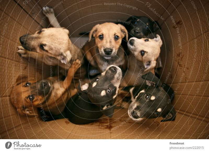Animal Life Movement Dog Brown Together Baby animal Joy Animal face Protection Group of animals Curiosity Packaging Cute Joie de vivre (Vitality) Positive