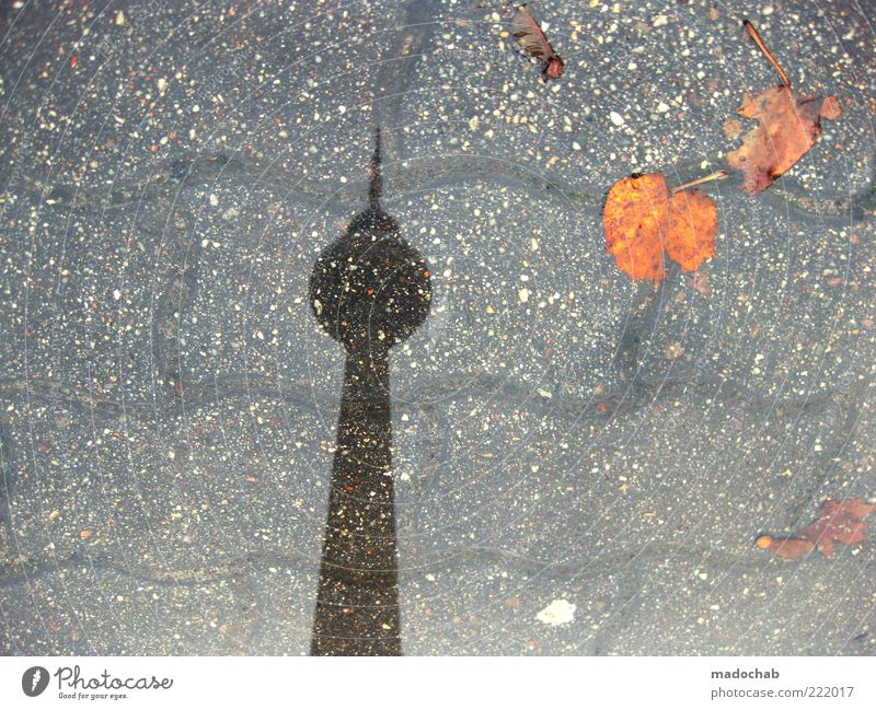 totem Environment Nature Autumn Climate Climate change Weather Bad weather Rain Berlin Tower Architecture Berlin TV Tower Bizarre Puddle Leaf Colour photo