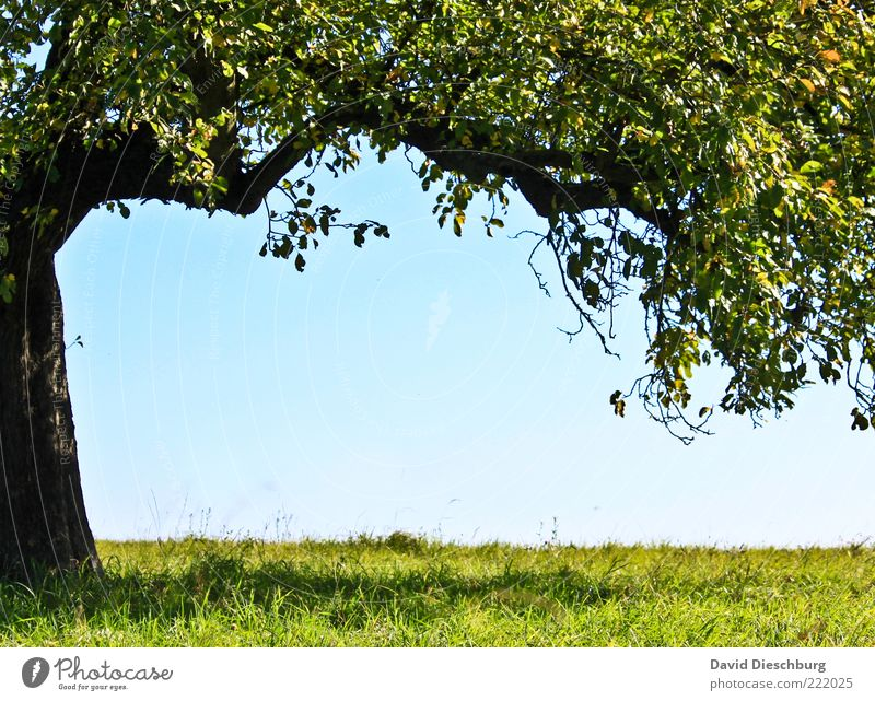 resting place Nature Plant Cloudless sky Summer Beautiful weather Tree Grass Leaf Foliage plant Blue Green Black Frame Tree trunk Branch Individual Summery