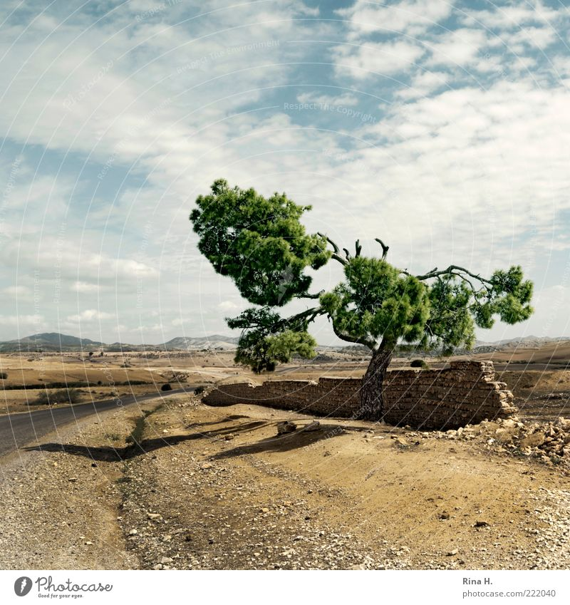 Nature Sky Tree Plant Loneliness Far-off places Yellow Street Autumn Wall (barrier) Lanes & trails Sand Landscape Weather Environment Climate